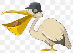 Mouth Cartoon Duck Material - Pelican Bird Cartoon Illustration PNG