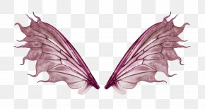 Wing - Butterfly PNG