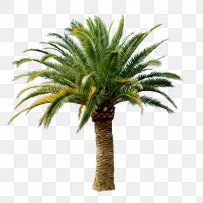 Palm Tree - Arecaceae Tree Clip Art PNG