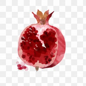 Hand-painted Pomegranate - Watercolor Painting Drawing Fruit Illustration PNG