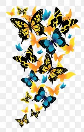 Butterflies Clipart Picture - Butterfly Clip Art PNG