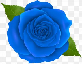 Blue Rose Transparent Clip Art - Blue Rose Centifolia Roses Clip Art PNG