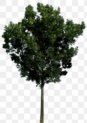 Tree Image, Free Download, Picture - Tree Icon PNG