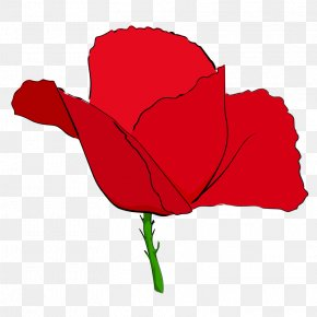 Poppies - Remembrance Poppy Common Poppy Clip Art PNG