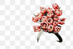 Lily Family Bud - Floral Spring Flowers PNG