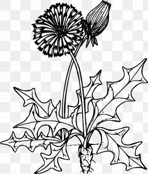 Dandelion - Coloring Book Dandelion Herb Drawing Child PNG