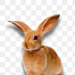 Rabbit - Lossless Compression Rabbit Clip Art PNG