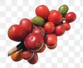 Coffee Beans - Robusta Coffee Frutti Di Bosco Arabica Coffee Coffee Bean PNG
