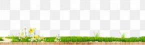Green Grass Flower - Lawn Wheatgrass Land Lot Energy Wallpaper PNG