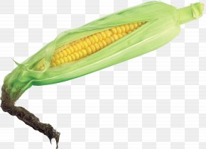 Corn Image - Corn On The Cob Maize Vegetable Husk PNG