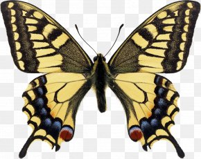 Monarch Butterfly - Swallowtail Butterfly Papilio Machaon Monarch Butterfly Eastern Tiger Swallowtail PNG