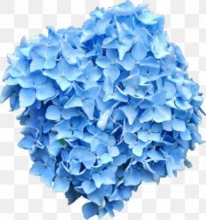 Blue Flower - French Hydrangea Flower Blue Clip Art PNG