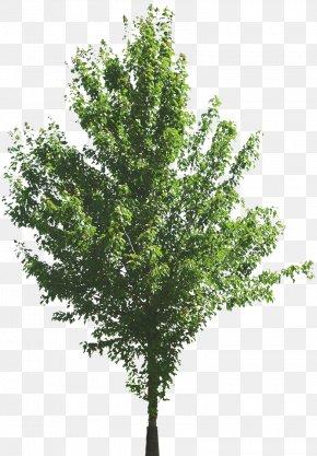 Tree - Tree Computer Software Computer Graphics Clip Art PNG