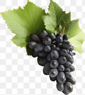 Grape Image Download Picture - Common Grape Vine Juice Must PNG