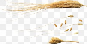 Wheat - Wheat Ear Caryopsis Secale PNG