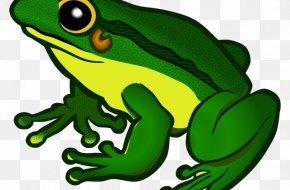 Frog - Frog Clip Art Transparency Desktop Wallpaper PNG