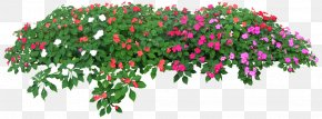 Rose Flower Garden - Flower Tree Photography Clip Art PNG