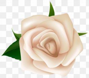White Rose Clipart Image - Rose White Clip Art PNG