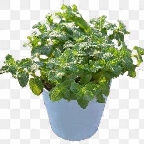 Mint Flower Pot - Mint Flowerpot Leaf PNG