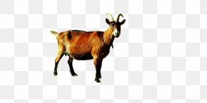 Sheep - Goat Sheep Camel Cattle Alpaca PNG