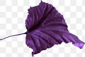 Leaf - Leaf Petal Violet Color Clip Art PNG
