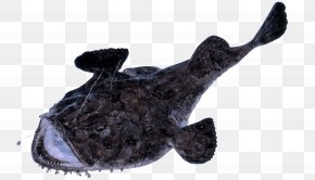 Stuffed Toy Plush - Fish Toy Electric Ray Plush Stuffed Toy PNG