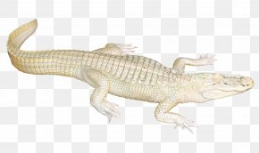 White Crocodile - Lizard Crocodile Fauna Terrestrial Animal PNG