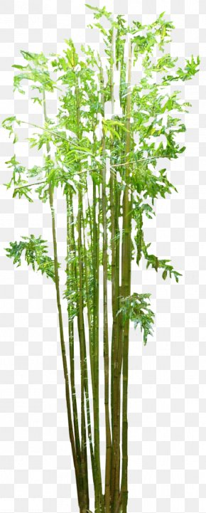 Bamboo Image - Bamboo Floor PNG