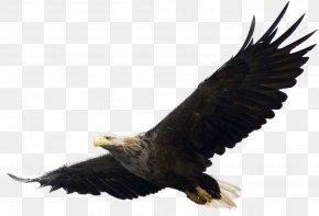 Eagle Image, Free Download - Eagle Computer File PNG