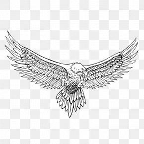 Eagle - Bald Eagle Drawing Line Art PNG