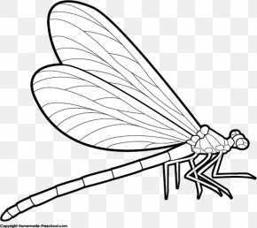 Black Dragonfly Cliparts - Drawing Free Content Stock.xchng Clip Art PNG