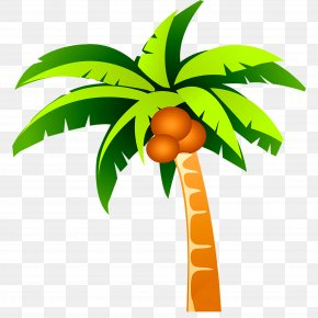 Coconut Tree Plant - Coconut Tree PNG