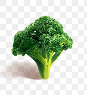 HD Broccoli - Broccoli Vegetable Download PNG