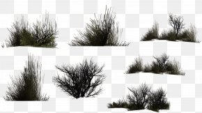 Grass - Herbaceous Plant Drawing Digital Image Clip Art PNG