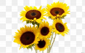 Sunflower - Common Sunflower Flower Bouquet Vase PNG