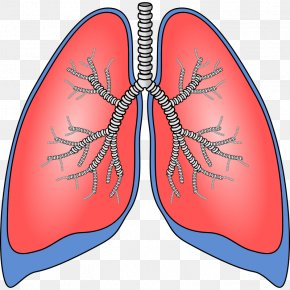 Human Anatomy Cliparts - Lung Breathing Clip Art PNG