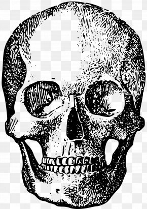 Illustration Skull - Skull Human Skeleton Bone PNG