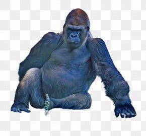 Snout Western Lowland Gorilla - Western Lowland Gorilla Snout PNG