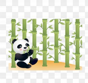 Vector Panda - Giant Panda Bear Red Panda Illustration PNG