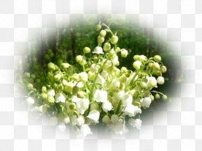 Plant April - Floral Design PNG