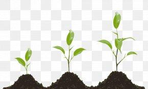 Plant - Plant Hormone Research Biology Clip Art PNG
