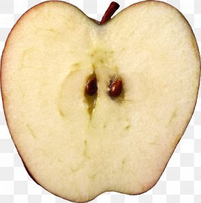 Apple - Apple Seed Oil Apple Seed Oil Fruit Salad Gala PNG