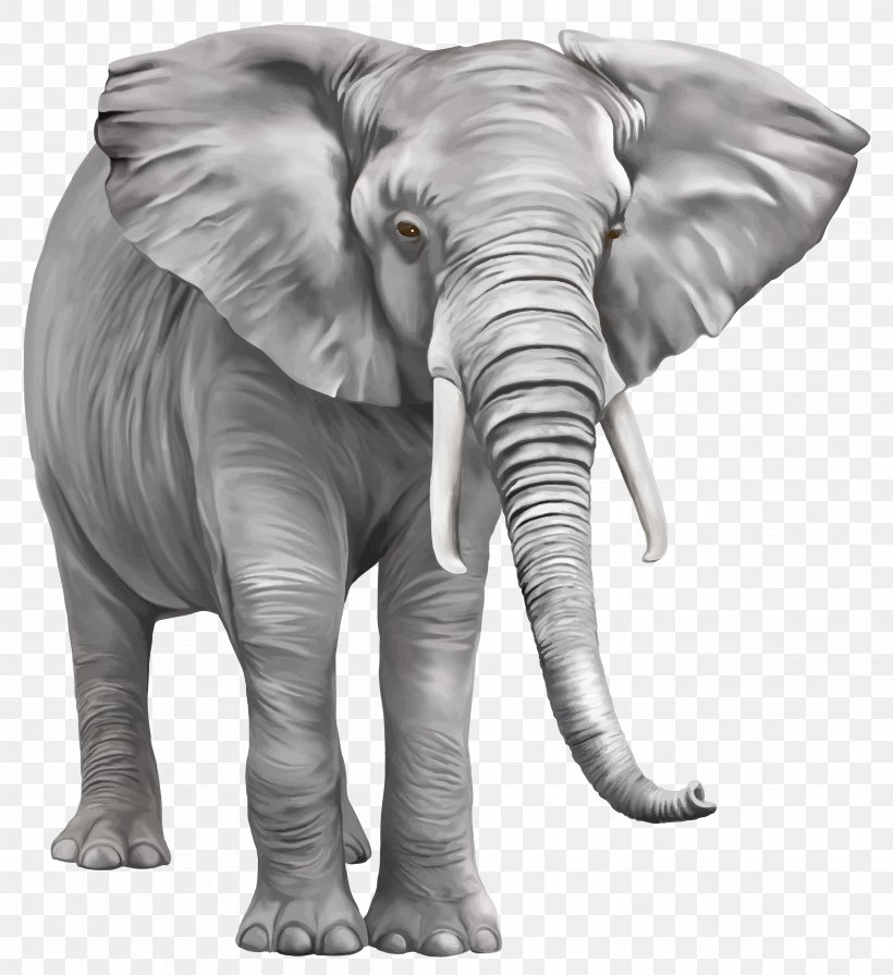 Indian Elephant Clip Art Png 4781x5223px Elephant