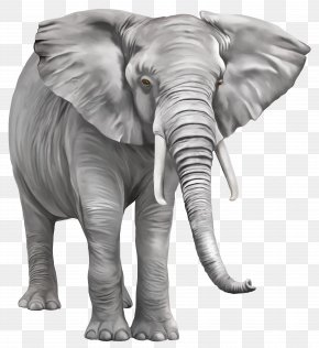 Elephant Free Download - Indian Elephant Clip Art PNG