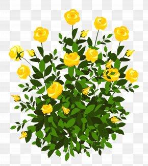 Yellow Rose Bush Clipart Picture - Rose Shrub Flower Clip Art PNG