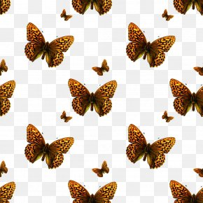 Butterfly Insect - Texture Mapping Photography Pattern PNG