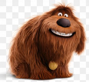Jack Russell - Duke Max Jack Russell Terrier Pug Gidget PNG