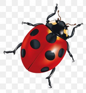 Ladybug - Insect Android Application Package Clip Art PNG