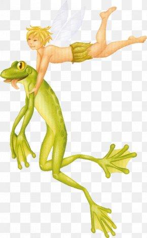 Frog - Frog Animal Drawing PNG