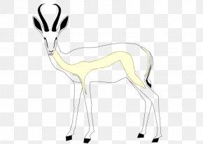 Gazelle - Springbok Gazelle Antelope Mammal Even-toed Ungulates PNG